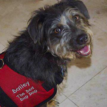 bailey-the-bed-bug-dog